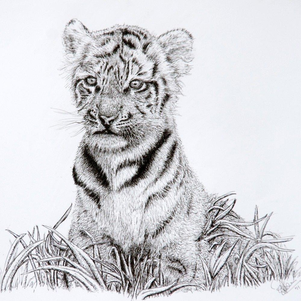 Wildlife Drawings from Paul Humphrey Art
